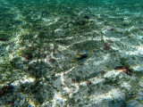 372 - Snorkeling ile Rodrigues janvier 2017 - GOPR6204 DxO Pbase.jpg