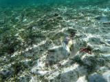 373 - Snorkeling ile Rodrigues janvier 2017 - GOPR6205 DxO Pbase.jpg
