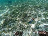 374 - Snorkeling ile Rodrigues janvier 2017 - GOPR6206 DxO Pbase.jpg