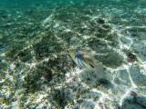 376 - Snorkeling ile Rodrigues janvier 2017 - G0046208 DxO Pbase.jpg