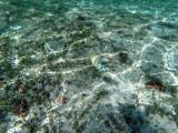385 - Snorkeling ile Rodrigues janvier 2017 - G0056217 DxO Pbase.jpg
