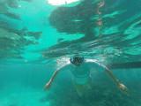 450 - Snorkeling ile Rodrigues janvier 2017 - GOPR6285 DxO Pbase.jpg