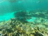 455 - Snorkeling ile Rodrigues janvier 2017 - GOPR6290 DxO Pbase.jpg