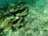 457 - Snorkeling ile Rodrigues janvier 2017 - GOPR6292 DxO Pbase.jpg