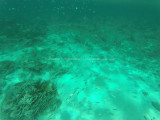 464 - Snorkeling ile Rodrigues janvier 2017 - GOPR6299 DxO Pbase.jpg