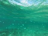 470 - Snorkeling ile Rodrigues janvier 2017 - GOPR6305 DxO Pbase.jpg