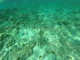 472 - Snorkeling ile Rodrigues janvier 2017 - GOPR6307 DxO Pbase.jpg