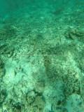 473 - Snorkeling ile Rodrigues janvier 2017 - GOPR6308 DxO Pbase.jpg