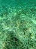 474 - Snorkeling ile Rodrigues janvier 2017 - GOPR6309 DxO Pbase.jpg