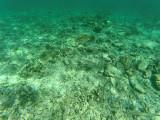 476 - Snorkeling ile Rodrigues janvier 2017 - GOPR6311 DxO Pbase.jpg