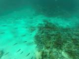478 - Snorkeling ile Rodrigues janvier 2017 - GOPR6313 DxO Pbase.jpg