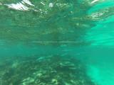 480 - Snorkeling ile Rodrigues janvier 2017 - GOPR6315 DxO Pbase.jpg