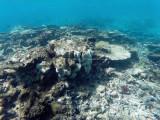 481 - Snorkeling ile Rodrigues janvier 2017 - GOPR6316 DxO Pbase.jpg