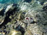 482 - Snorkeling ile Rodrigues janvier 2017 - GOPR6317 DxO Pbase.jpg