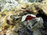 483 - Snorkeling ile Rodrigues janvier 2017 - GOPR6318 DxO Pbase.jpg