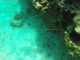 487 - Snorkeling ile Rodrigues janvier 2017 - GOPR6322 DxO Pbase.jpg