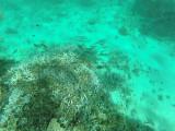 491 - Snorkeling ile Rodrigues janvier 2017 - GOPR6326 DxO Pbase.jpg