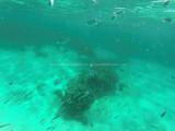493 - Snorkeling ile Rodrigues janvier 2017 - GOPR6330 DxO Pbase.jpg