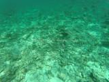 503 - Snorkeling ile Rodrigues janvier 2017 - GOPR6340 DxO Pbase.jpg