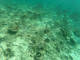 508 - Snorkeling ile Rodrigues janvier 2017 - GOPR6345 DxO Pbase.jpg