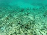 514 - Snorkeling ile Rodrigues janvier 2017 - GOPR6351 DxO Pbase.jpg