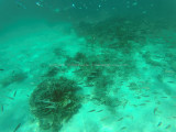 519 - Snorkeling ile Rodrigues janvier 2017 - GOPR6356 DxO Pbase.jpg