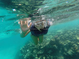 527 - Snorkeling ile Rodrigues janvier 2017 - GOPR6369 DxO Pbase.jpg