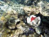 528 - Snorkeling ile Rodrigues janvier 2017 - GOPR6370 DxO Pbase.jpg
