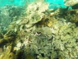 529 - Snorkeling ile Rodrigues janvier 2017 - GOPR6371 DxO Pbase.jpg