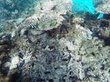 530 - Snorkeling ile Rodrigues janvier 2017 - GOPR6372 DxO Pbase.jpg