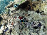 532 - Snorkeling ile Rodrigues janvier 2017 - GOPR6374 DxO Pbase.jpg