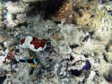 533 - Snorkeling ile Rodrigues janvier 2017 - GOPR6375 DxO Pbase.jpg