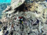 536 - Snorkeling ile Rodrigues janvier 2017 - GOPR6378 DxO Pbase.jpg