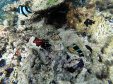 540 - Snorkeling ile Rodrigues janvier 2017 - G0066382 DxO Pbase.jpg