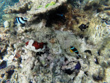 541 - Snorkeling ile Rodrigues janvier 2017 - G0066383 DxO Pbase.jpg