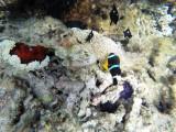 544 - Snorkeling ile Rodrigues janvier 2017 - G0076386 DxO Pbase.jpg