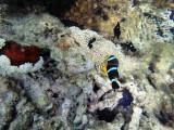 545 - Snorkeling ile Rodrigues janvier 2017 - G0076387 DxO Pbase.jpg