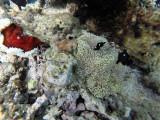 549 - Snorkeling ile Rodrigues janvier 2017 - G0086391 DxO Pbase.jpg