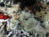 551 - Snorkeling ile Rodrigues janvier 2017 - G0086393 DxO Pbase.jpg