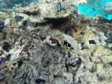 553 - Snorkeling ile Rodrigues janvier 2017 - G0096395 DxO Pbase.jpg
