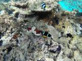 556 - Snorkeling ile Rodrigues janvier 2017 - G0096398 DxO Pbase.jpg