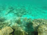 559 - Snorkeling ile Rodrigues janvier 2017 - GOPR6401 DxO Pbase.jpg
