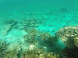 560 - Snorkeling ile Rodrigues janvier 2017 - GOPR6402 DxO Pbase.jpg