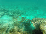 561 - Snorkeling ile Rodrigues janvier 2017 - GOPR6403 DxO Pbase.jpg