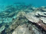 562 - Snorkeling ile Rodrigues janvier 2017 - GOPR6405 DxO Pbase.jpg