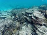 567 - Snorkeling ile Rodrigues janvier 2017 - GOPR6410 DxO Pbase.jpg