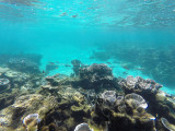 580 - Snorkeling ile Rodrigues janvier 2017 - GOPR6423 DxO Pbase.jpg