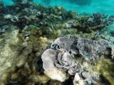 581 - Snorkeling ile Rodrigues janvier 2017 - GOPR6424 DxO Pbase.jpg