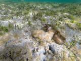 586 - Snorkeling ile Rodrigues janvier 2017 - G0106431 DxO Pbase.jpg