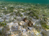 590 - Snorkeling ile Rodrigues janvier 2017 - G0116435 DxO Pbase.jpg